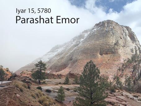 AUDIO ESSAY: Torah for the Earth - Emor