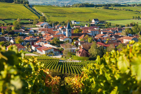 champagne_wine_villagejpg