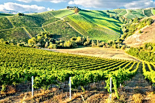 bordeaux_winery.jpg