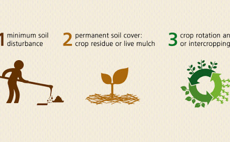 On Earth Day we Recognize Soil