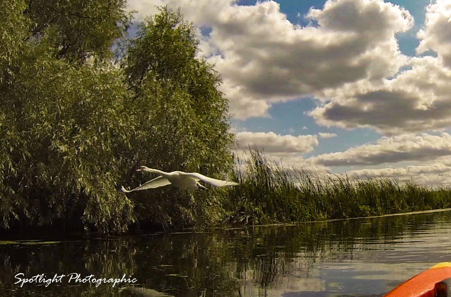 Swan4 go pro still