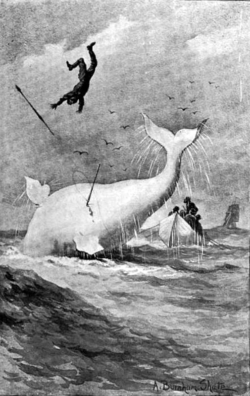 Moby Dick burnham shute