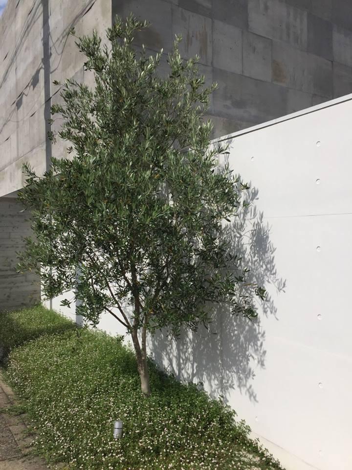 外構の植栽