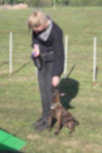 Maiken Trorup, Hollandsk hyrdehund, Hundetræning