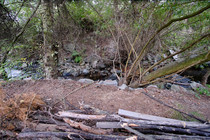 193-wellington-ave-trail-bc-2021-022-2000px.jpg