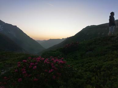 Rhododendron en fleur en Juillet