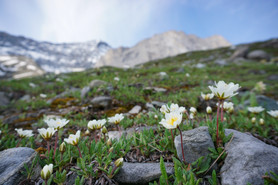 Une flore préservée au pied des glaciers
