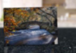 PULLABROOK WOODS - GLASS DISPLAY ART MOC