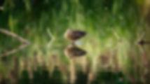 DSC_3923-Edit-Edit.jpg