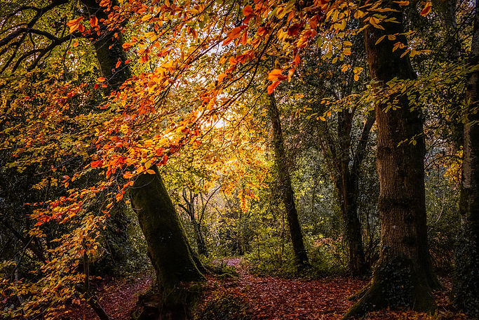 Parke Woods, Bovey Tracey