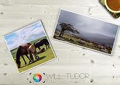 Will Tudor Photography