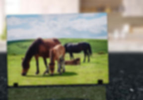 DARTMOOR PONY - GLASS DISPLAY ART MOCKUP