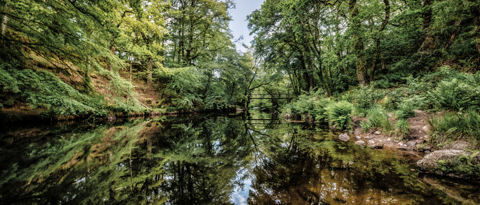 Teign River Reflections