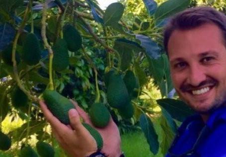 A come autunno, come avocado
