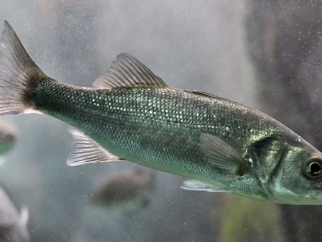 Degustazione reale, San Valentino e i pesci