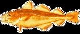 Atlantic-cod__edited.png