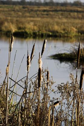 Vandkraftsøen, Holstebro