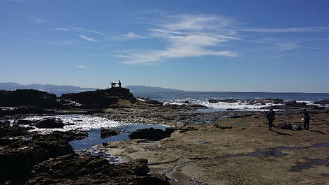 Port renfrew botanical beach
