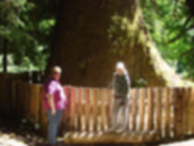 port renfrew largest tree
