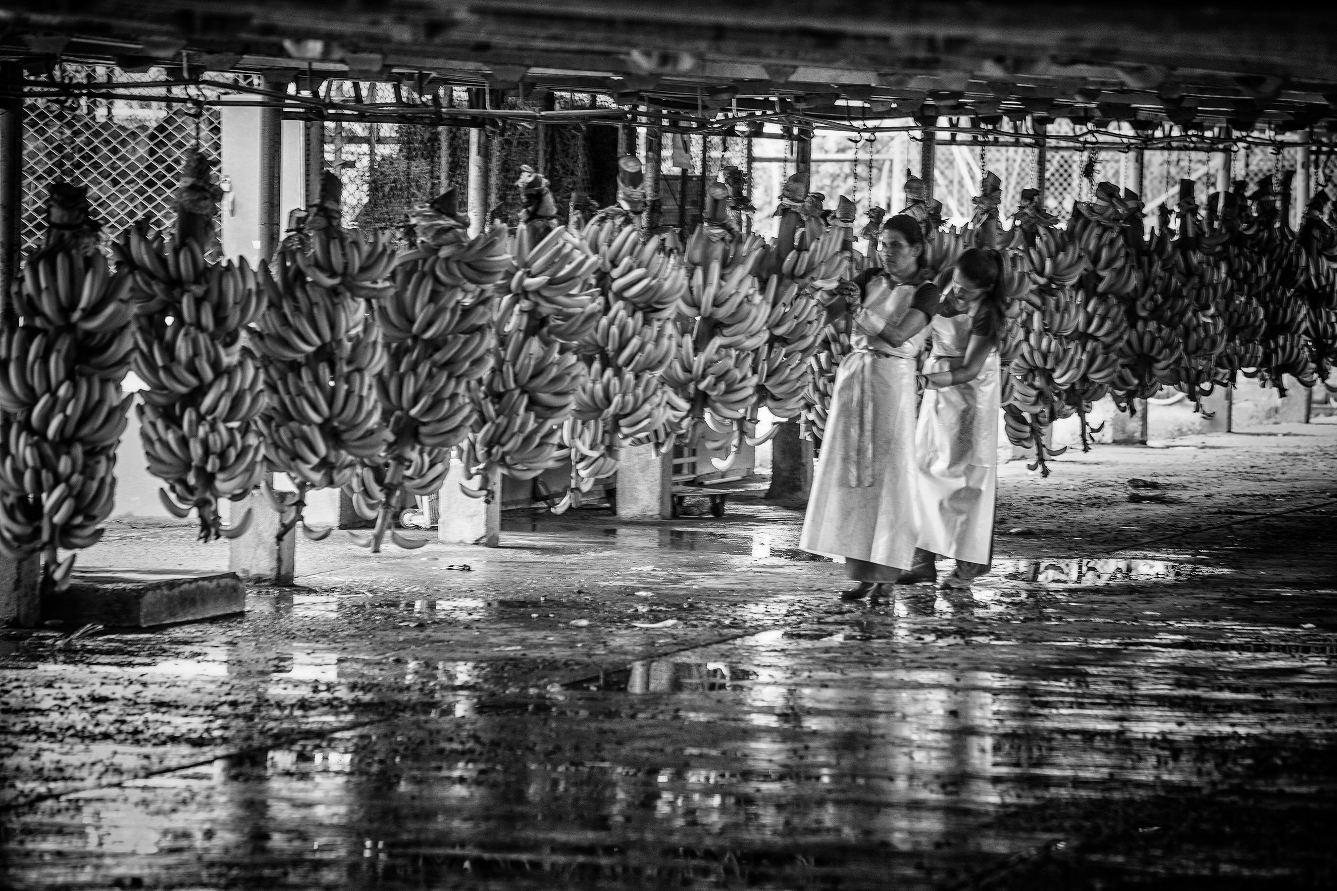 01 Bananera