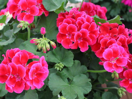 Top 5 Thriving Plants for Your City Garden at the Hill-Physick Plant Sale