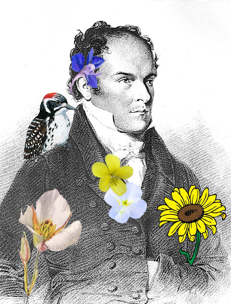 Thomas Nuttall: image courtesy http://plantsandrocks.blogspot.com/2015/08/mr-nuttall-and-his-violet-his-lily-his.html