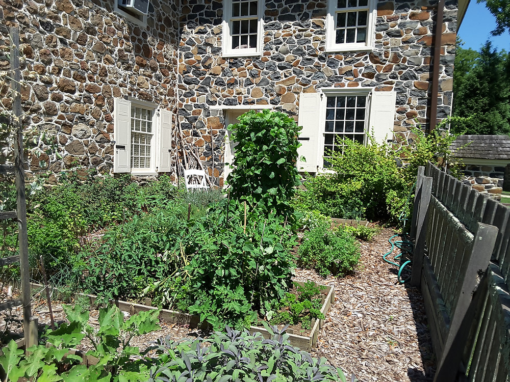 The kitchen garden at Historic Waynesborough summer 2016