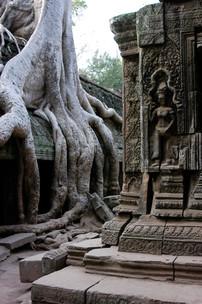 Ta Prohm, Angkor What, Cambodia 2008