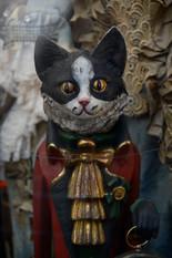 Venetian cat, 2014
