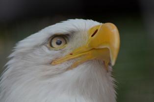 American Eagle, 2014