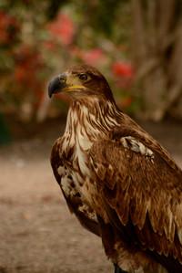 Eagle 2015