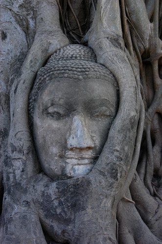 Attutaya, Tree Face, Thailand, 2008