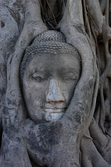 Attutaya, Tree Face, Thailand, 2008