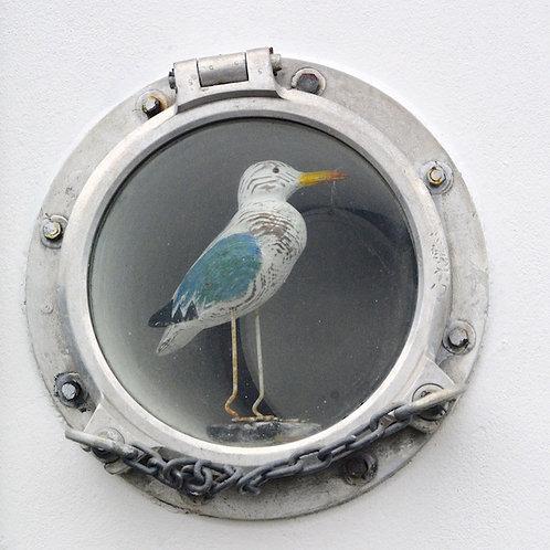 Breton Gull