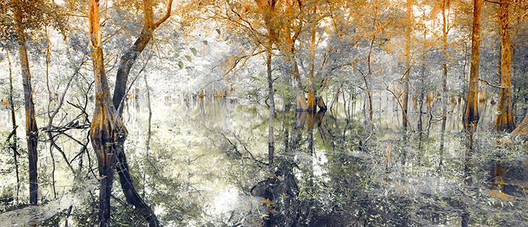 Panorama, Cypress Tree Swamp