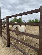 кони2.jpg