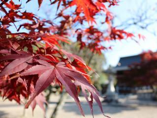 やっぱり京都の紅葉は綺麗でした。
