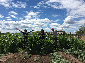 interns_dancing in the corn.jpg