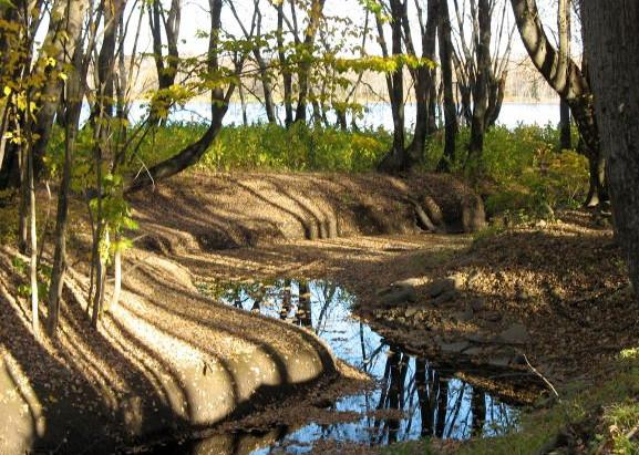 Ecotherapy: the Park Prescription