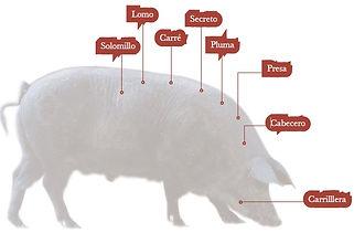 esquema_cerdo_ibérico_(002).jpg