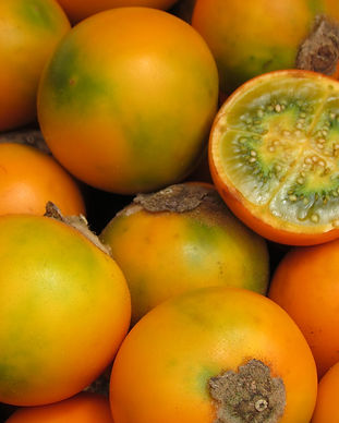 lulo-naranjillo-bebedero-costa-rica-liz-furlong.jpg