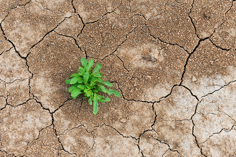 Perseverance and resilience green weeds