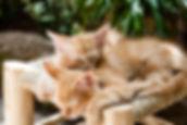 kittens-1916542_1920.jpg