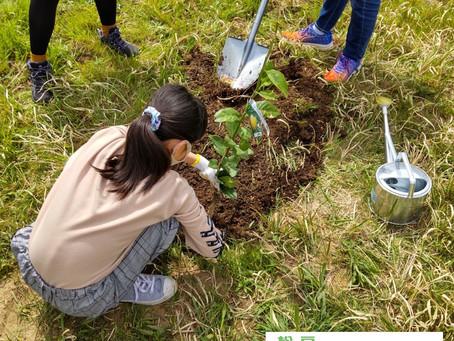 松戸みんなのみどりプロジェクト、植樹!