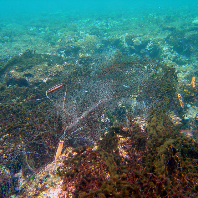 ghost nets dragged down to the bottom of the ocean