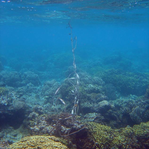 hundreds of kilometres of ghost nets