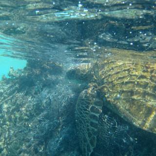 Sea turtle stuck in a ghost net