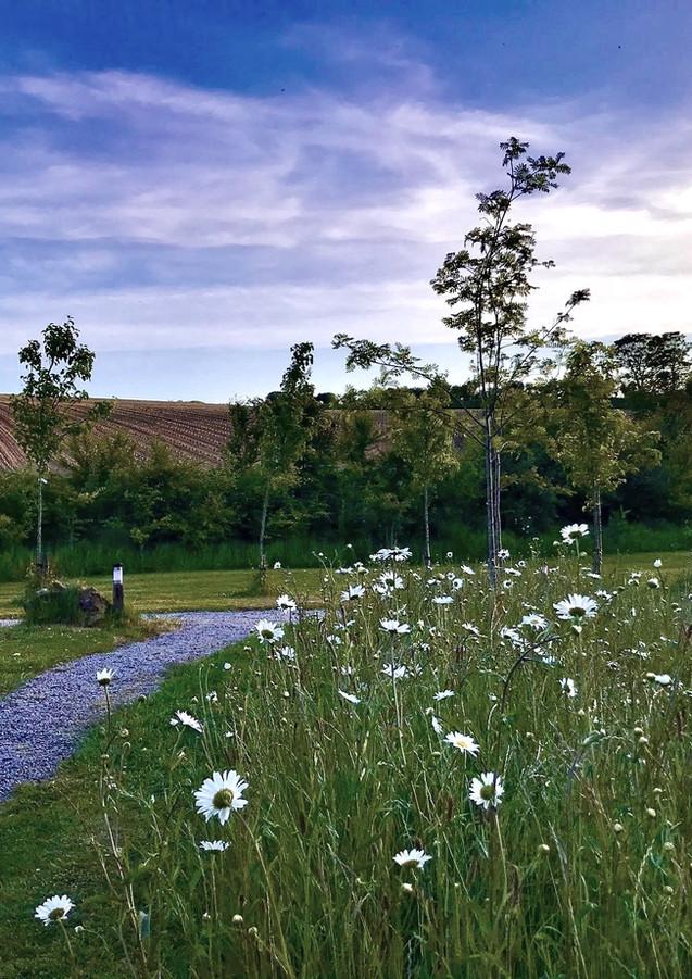Wild flowers and big skies at Pengelly Retreat