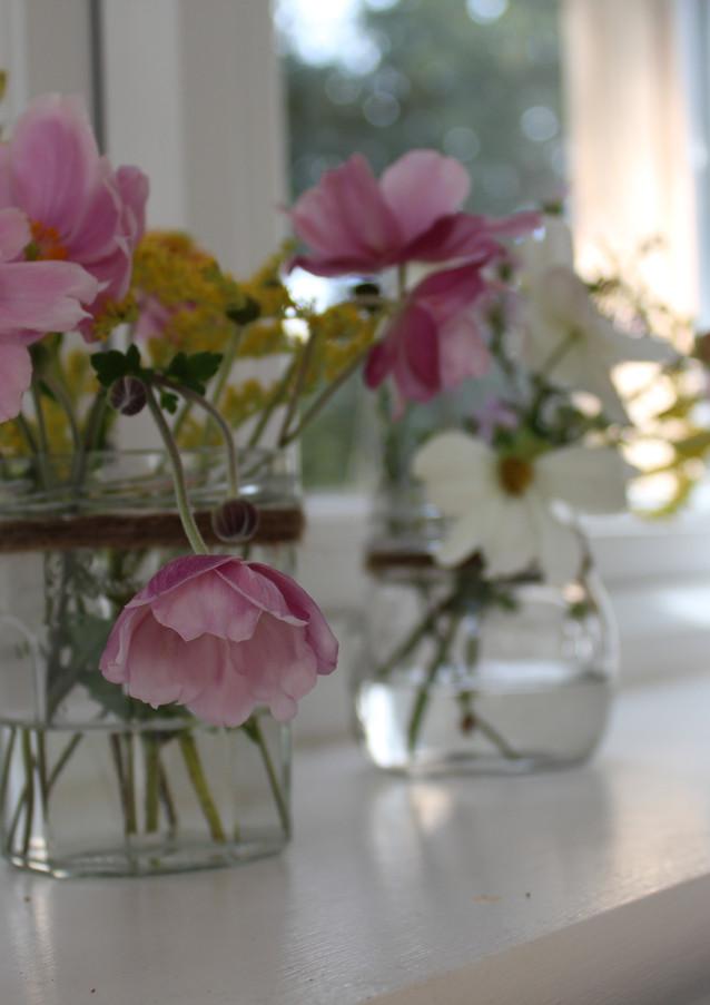 jam jar flowers anenome cosmos daisies p
