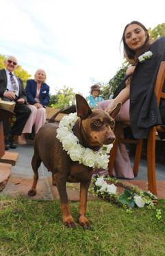 Dog friendly wedding at Treseren